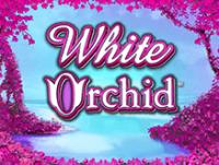 White Orchid от IGT Slots в лицензированном сайте Вулкан